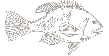 outline of fish - graphic